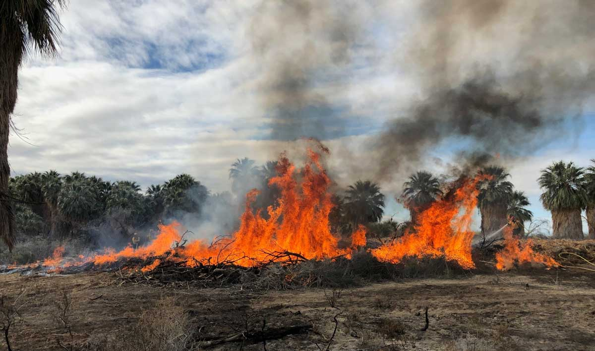 BLM prescribed fire Salton Sea