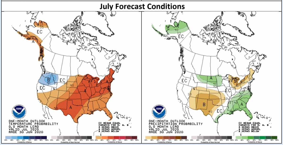 Temperature and precipitation forecast for July