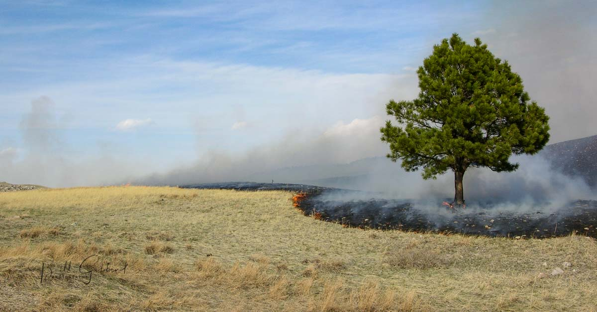 Red Valley Rx Burn Custer St Pk, South Dakota