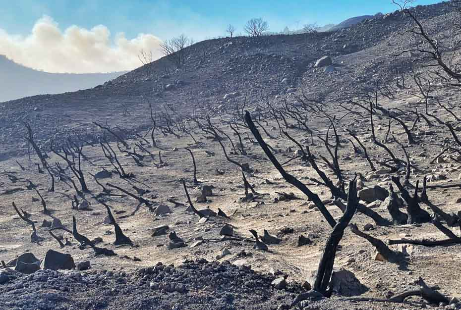 Charred landscape at the Alisal Fire