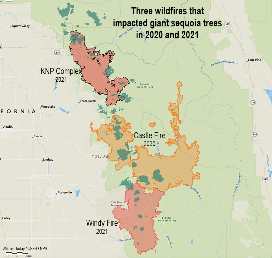 Three Fires, giant sequoia trees